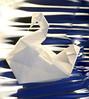 Swan. Roman Diaz