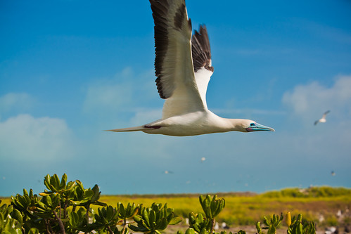 Journey to Midway Island