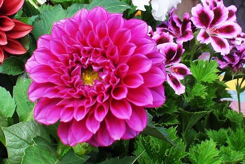 Las flores del jardín de Mamá by alopez2006
