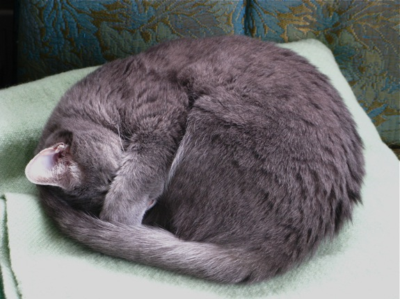 ruby grey tabby cat 001