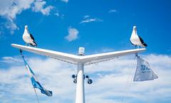 Gaviotas - Catamaran (Matias Melo) Tags: gaviotas turisur argentina bariloche catamaran water