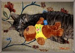Puki (Simply Viola) Tags: cats kittens felini gatti gattini