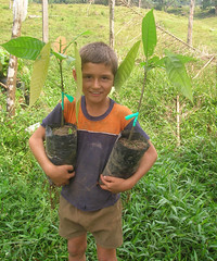 Taller de Injertos (actcolombia) Tags: children colombia child farm niños bellavista niño act campesino siembra injertos niñocamesino farmerchild injertosdeplantas