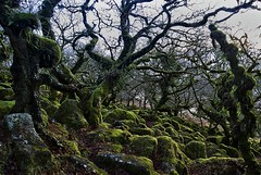 Wistman's Wood (mattharvey1) Tags: moss boulders devon lichen ferns ssi dartmoor wistmanswood ancientforest siteofspecialscientificinterest pedunculateoak 1855mmf3556gii wizenedtree stuntedoak