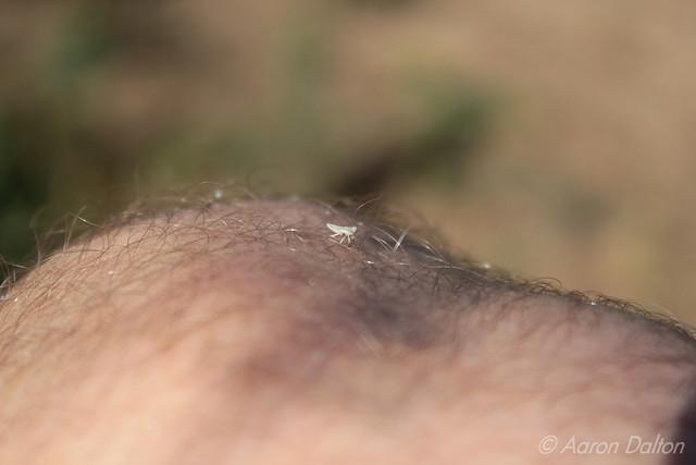 Knee Bug