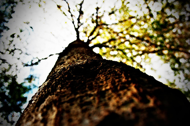 lomoactiontree