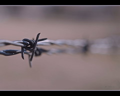 Freedom (S_Freer) Tags: fence wire nikon bokeh smooth february barb barbwire 149 hwga d7000 ourdailychallenge 2011th19 323652011