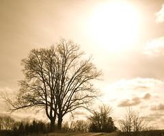 Tree (h~green) Tags: tree alabama newburg franklincounty