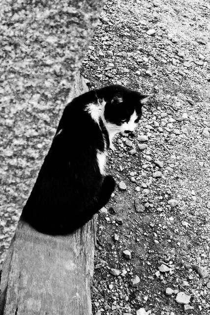 Today's Cat@2011-02-07