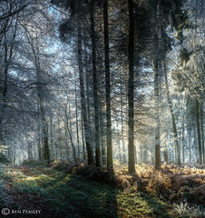 Narnia Calling... / All Rights Reserved (Spotty Photo) Tags: wood trees winter sunlight cold forest square dawn high nikon frost path fantasy range dymanic hdr westmidlands wanderings d300 digitalcameraclub 100commentgroup