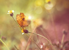 summer Love (twomeows (away...)) Tags: pink flowers wild blur yellow canon butterfly garden soft dof bokeh pastel f14 dream 85mm contax 50d