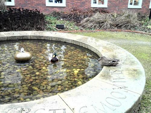 ducks wbs