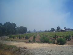Brigadoon bushfire (Figgles1) Tags: railroad train fire pacific indian smoke railway westernaustralia dirtywindow bushfire throughthewindow brigadoon indianpacific p2060005