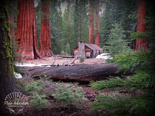 Number 23: Mariposa Grove