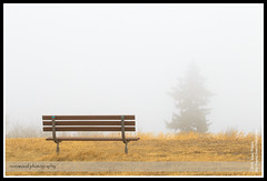 Foggy Bench at Cross Conservation Area
