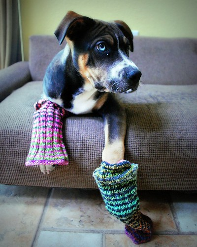 or Doggy Leg Warmers?