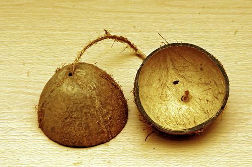 Monty Python Coconut