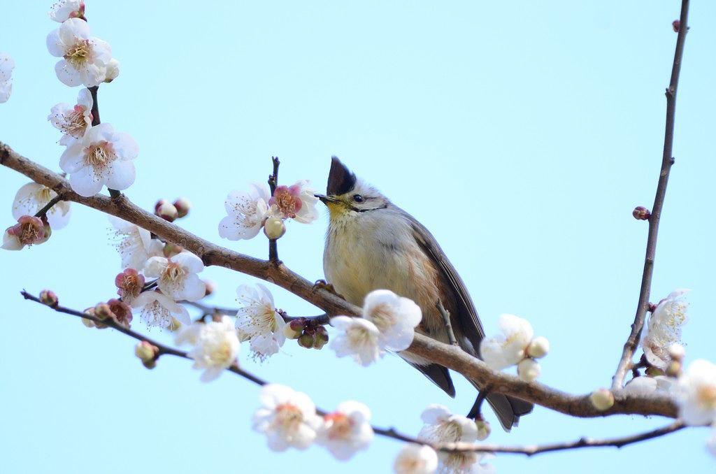 中高海拔~鳥