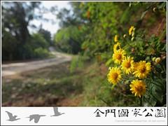 小油菊-01.jpg