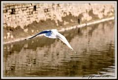 SHADHINOTA 1/40 (dClaudio [homofugit]) Tags: river freedom nikon frame bangladesh seagul d90 mygearandme mygearandmepremium shdhinota