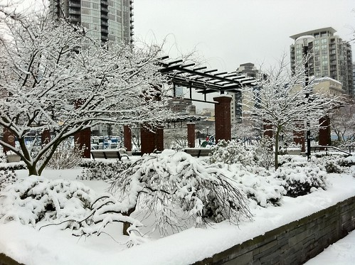 Snow Day in Vancouver
