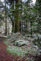 Snowy Sanborn (*~Dawn~*) Tags: california winter snow forest snowflakes saratoga freezing sniffles sanborn feb26 californiasnow bayareasnow sanbornpark sanbornskylinecountypark sanjosesnow bayareawinter southbaysnow snowinsaratoga february26snow