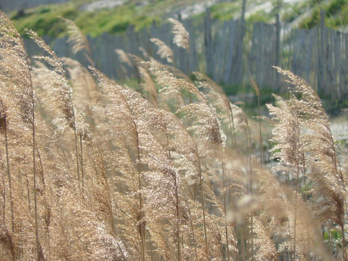 behind the dunes