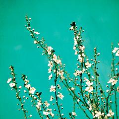 Reach (Melanie Alexandra Photography) Tags: nature floral spring