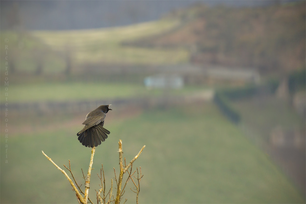 El canto del cuervo