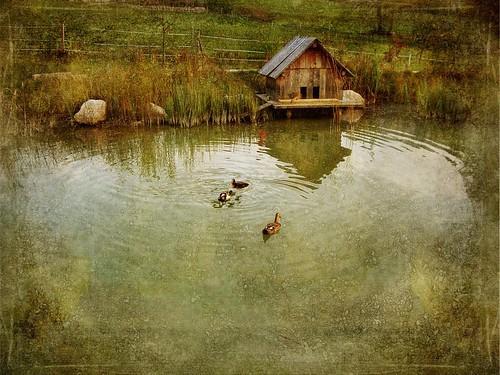Pond ( Bad Aussee - Austria )
