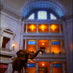 Smithsonian Museum of Natural History African Elephant in the rotunda. by ObieVIP