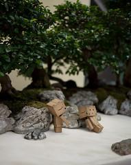 03.05.2011 (greenplasticamy) Tags: trees tree japan project toy lumix japanese robot amazon day mini daily panasonic every cardboard micro photoaday bonsai bonsaitree 20mm 365 everyday figurine 43 danbo f17 amazoncojp gf1 mft project365 365days revoltech danboard micro43 minidanboard minidanbo dmcgf1