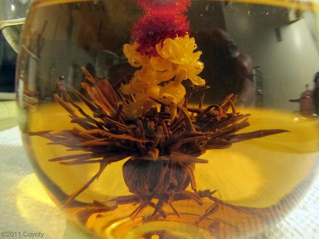 Earl Grey, Flowering