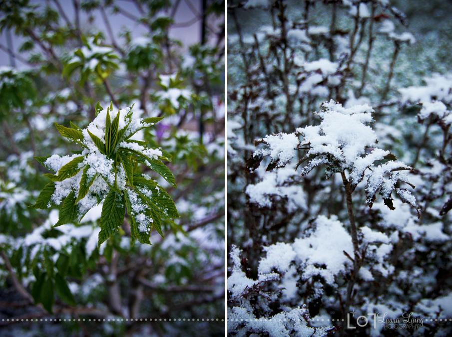 snow2011-6