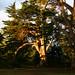 Zámecký park Erquy