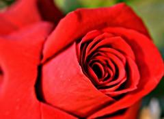My Treasure (-Reji) Tags: light sky sun flower love beautiful beauty smile sunshine rose happy petals nikon soft skies treasure you happiness your sight lovely brilliant tender thee d90 rejik