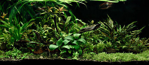 Aquaone 1: plants rearranged