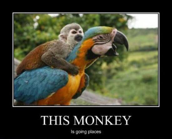 motivate-monkey