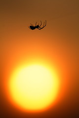 The Spider (Spice  Trying to Catch Up!) Tags: light sunset shadow sky sun color art nature silhouette canon insect geotagged photography spider photo flickr colours image web picture vivid      gettyimages  ibarakiken