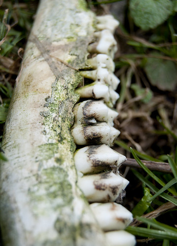 Overgrown Bones III