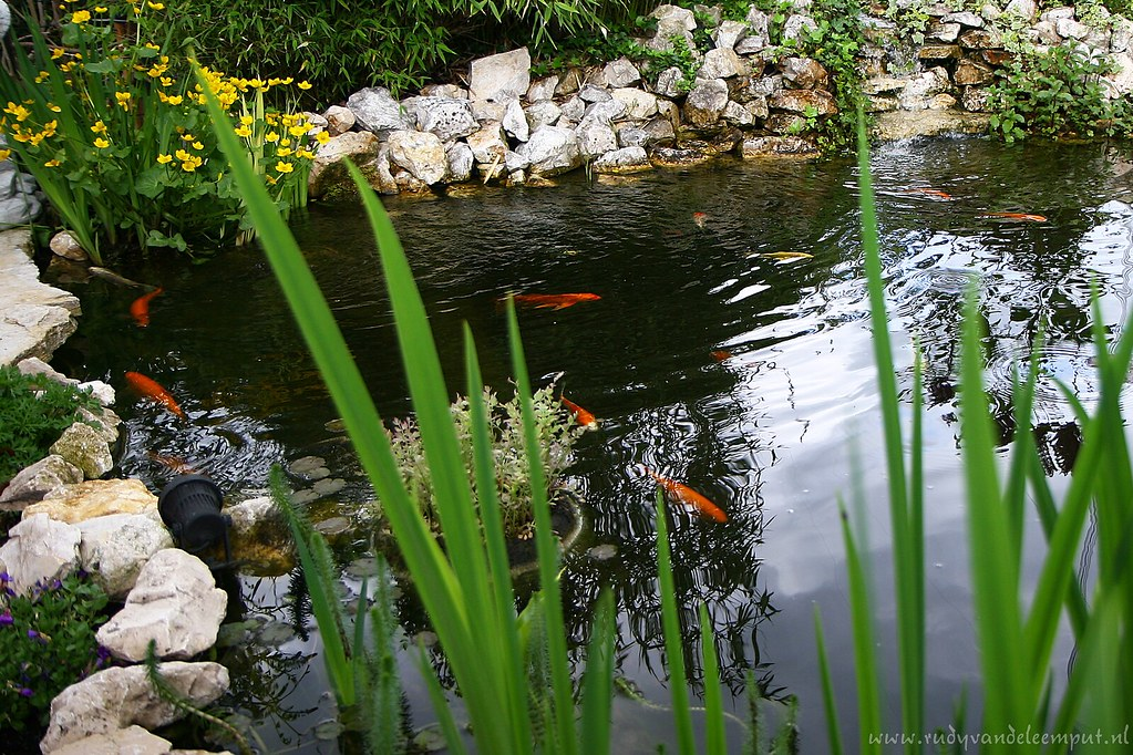 Karpers In Tuin : The world s best photos of karpers and koi flickr hive mind