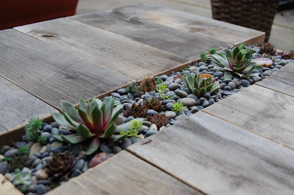 DIY Succulent Table | Far Out Flora
