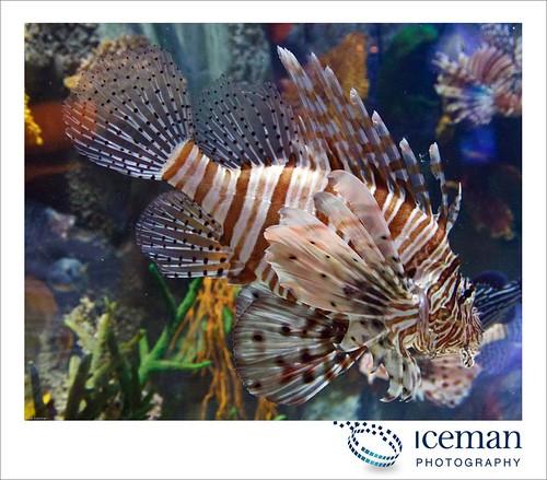 Dubai Aquarium 222