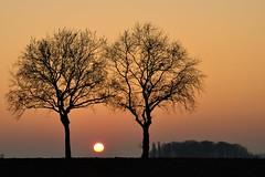 Platanes au crpuscule (pierre hanquin) Tags: trees light color geotagged nikon europa europe belgium belgique d pierre arbres 90 soe hannut itswritteninthestars ringexcellence dblringexcellence hanquin