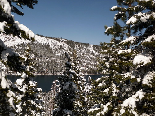 Snow covered trees on Donner Lake, California, United States of America