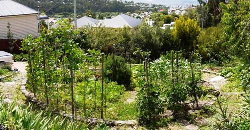 Christina's Front Garden