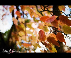 autumn afternoon (fotografimran) Tags: autumn winter red cold tree leave beauty canon death leaf die afternoon falling breeze