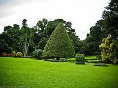 Треугольное дерево