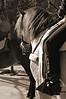 Jinete y caballo (Lo pare Daniel) Tags: galope