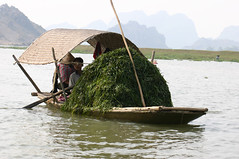 Workers collecting rivergrass?, North central Vietnam (sensaos) Tags: travel portrait people 2004 water river boat workers asia transport vietnam viet labour laborer nam collecting azie azië rivergrass sensaos